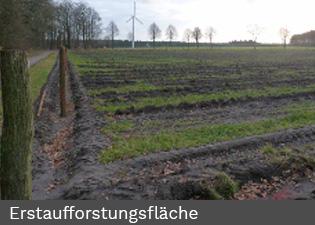 flaechenagentur3