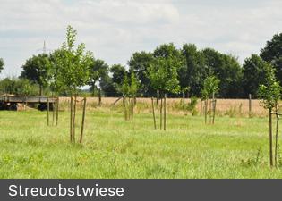 streuobstwiesen_hecken