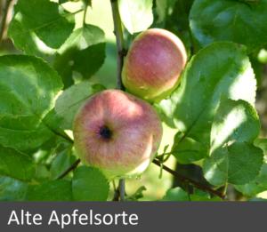 alte-apfelsorte_end