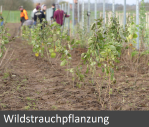 wildstrauchpflanzung_end